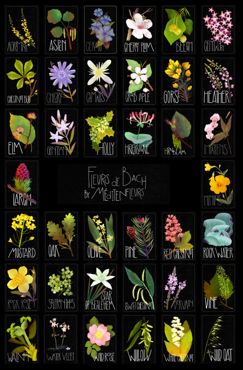 38-fleurs